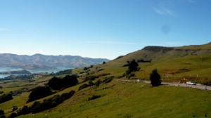 Dolphin Watching In Akaroa, New Zealand