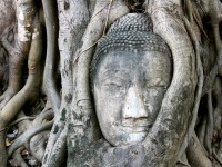buddha_face_in_tree_ayutthaya