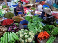 surrounded_by_veggies_thailand_market