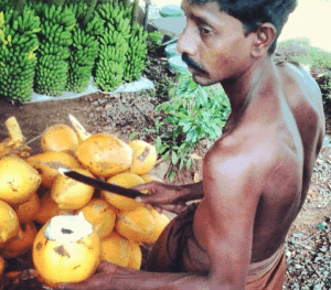 Sri Lanka King Coconut Juice