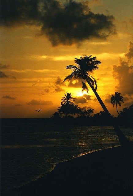 Belize Beach and Belize Jungle Resorts
