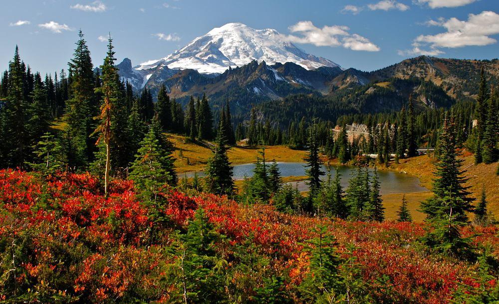 Best Time to Visit Mt. Rainier National Park
