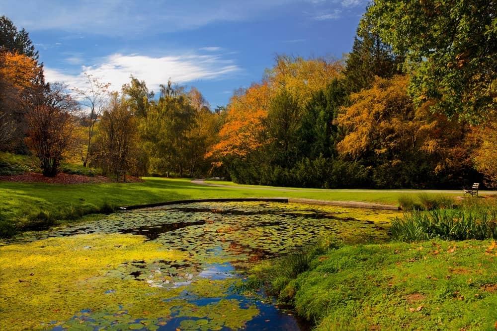 Fall colors in Washington Park Arboretum in Seattle, WA