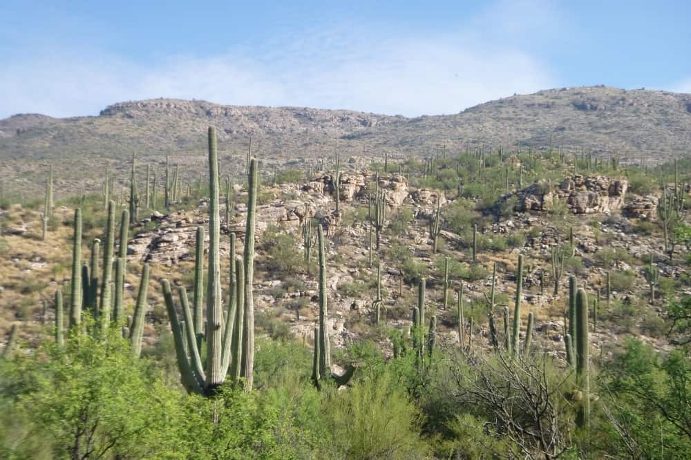 Places to Visit Tucson Arizona ~ Why It's Such an Interesting City to Visit