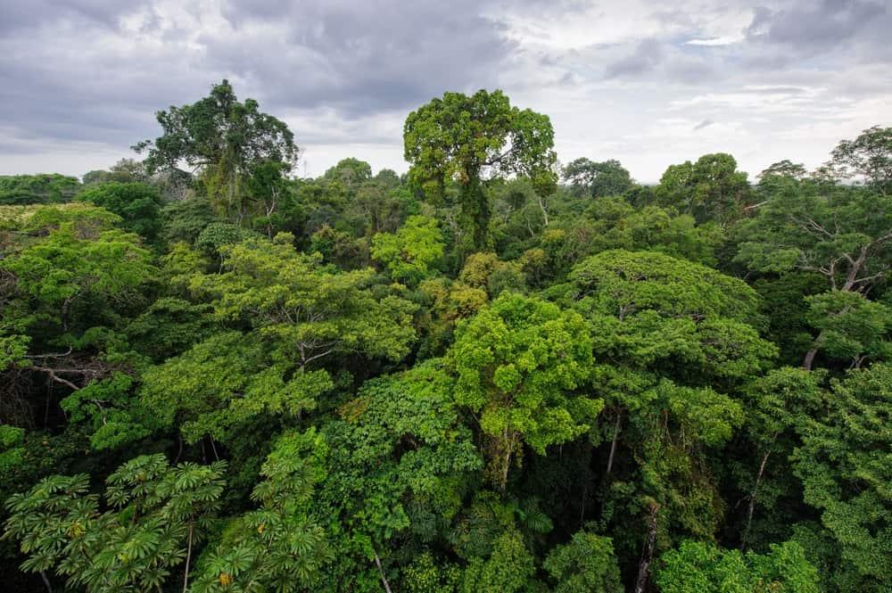 Amazon rainforest in Tambopata reserve, Peru